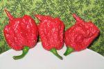 Nejpálivější papričky Carolina Reaper