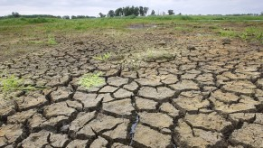 Sucho trápí zelináře